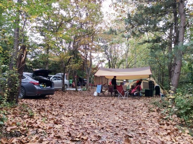 평화강변수목 캠핑장