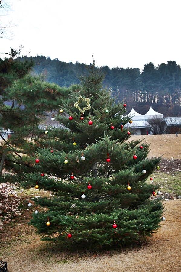 크리스마스 트리조명을 단 나무