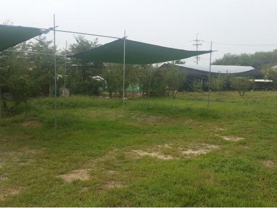 느티나무그늘아래 캠핑장
