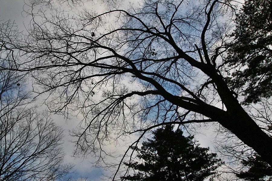 하늘과 울창한 나무