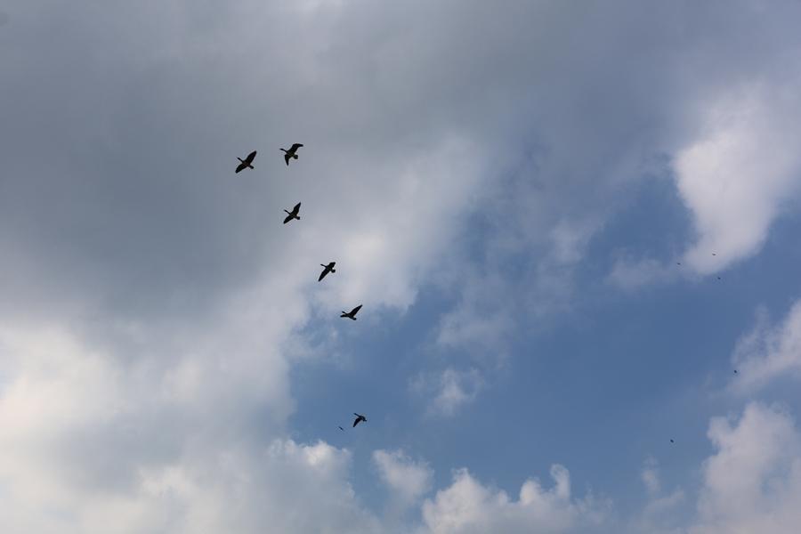 철새들이 나는 모습