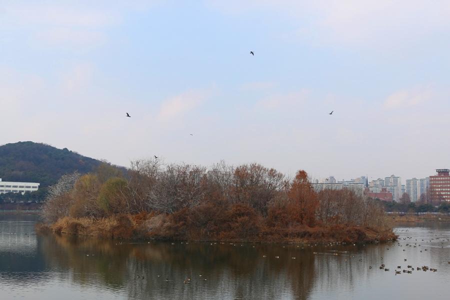 서호공원과 철새들