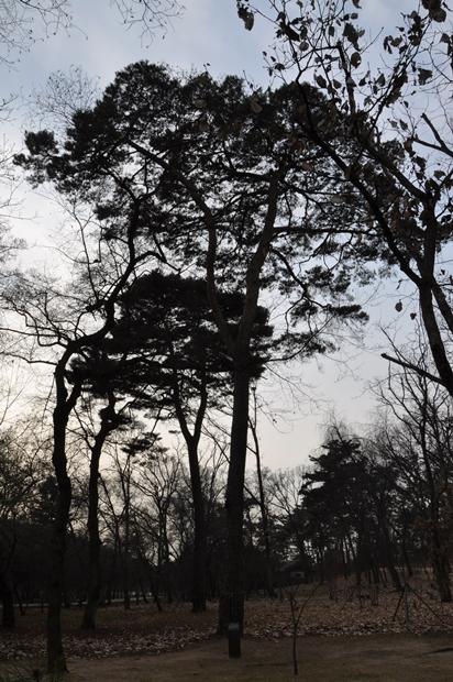 예릉 주변의 나무들