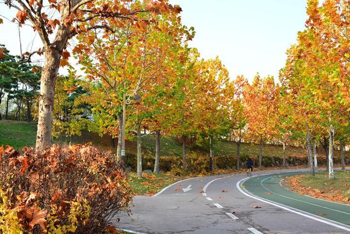 호수공원 자전거도로