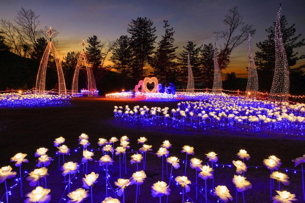 LED꽃이 가득 핀 두메향기의 야경