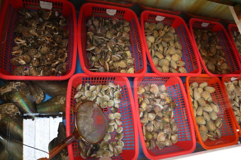 백미리 수산물직판장의 조개들