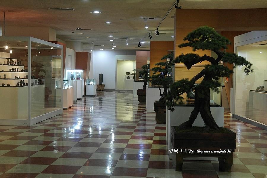 박물관 안 수석들과 소나무