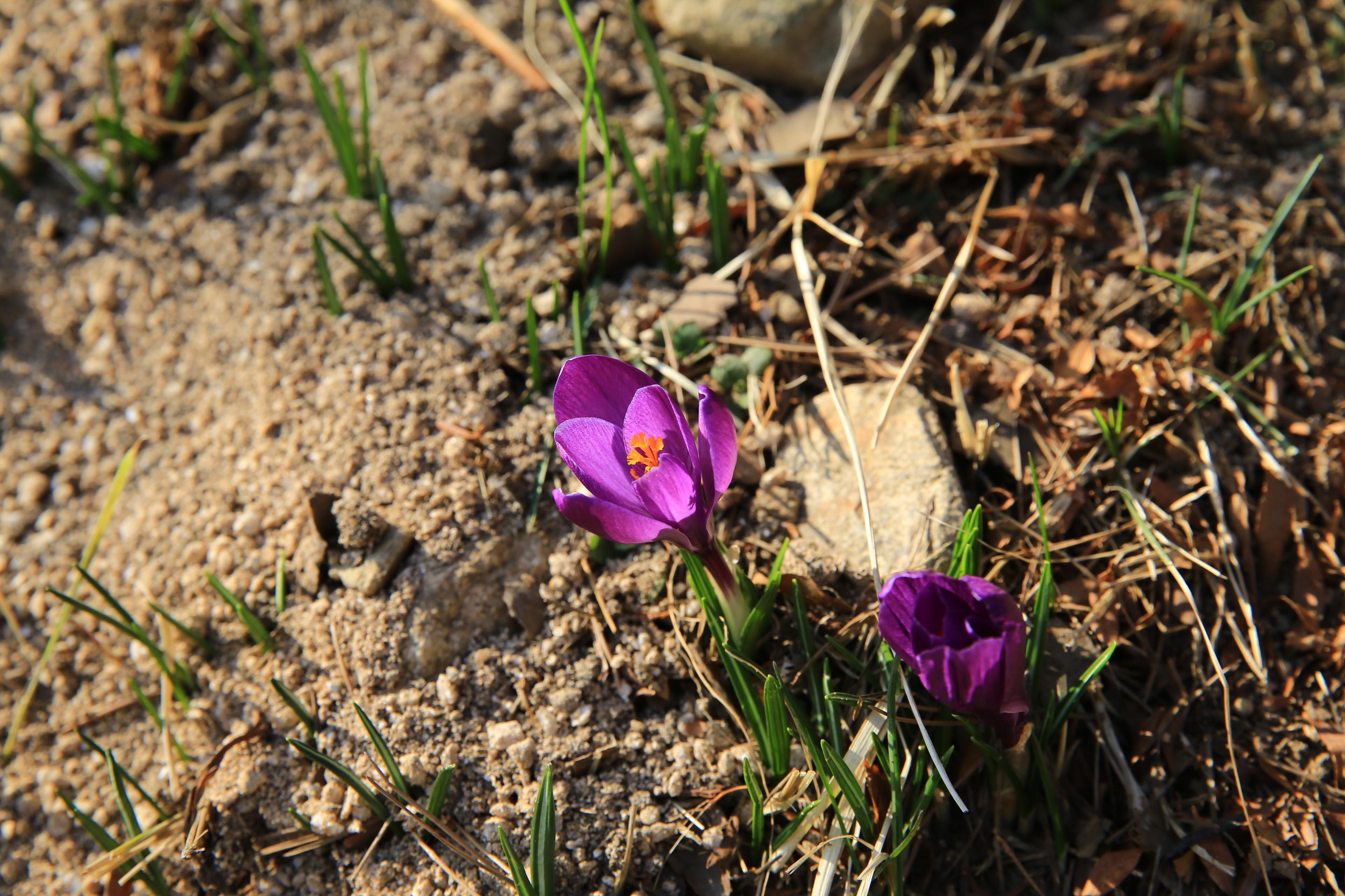 가평여행코스 야생화 봄꽃 데이트 아침고요수목원