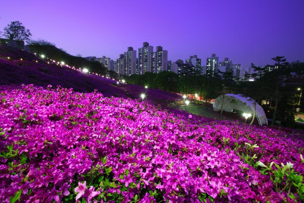철쭉이 가득 핀 야간 풍경