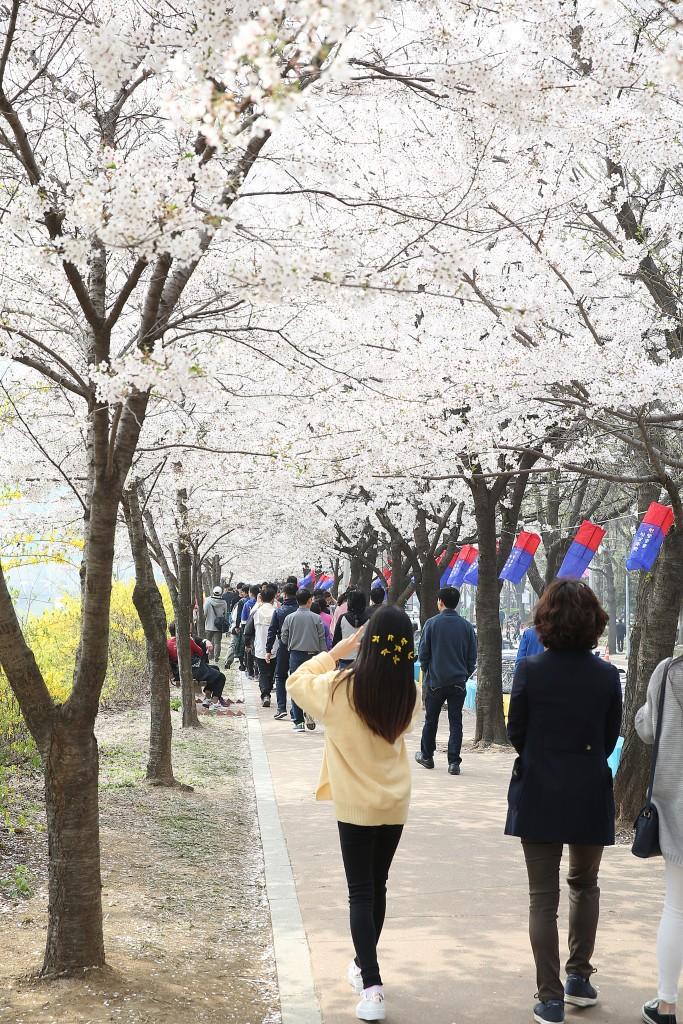 벚꽃 구경 하는 사람들