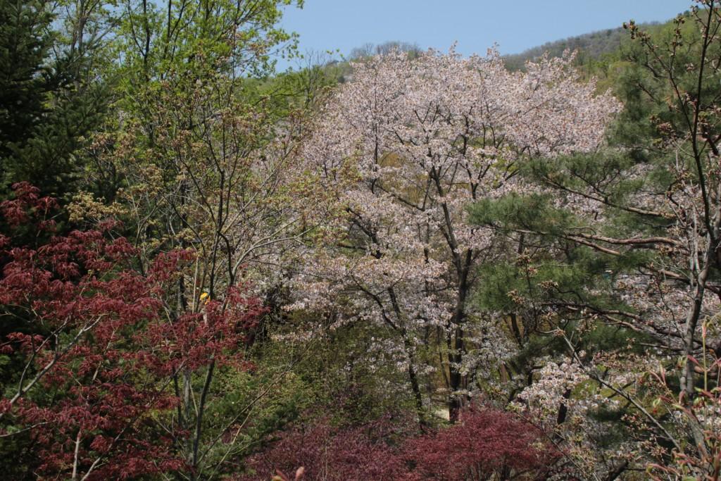 광쥬화담숲,곤지암도자축제 141