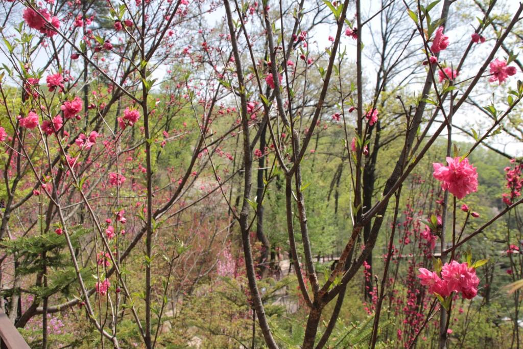 광쥬화담숲,곤지암도자축제 187
