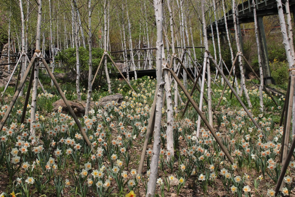 광쥬화담숲,곤지암도자축제 278