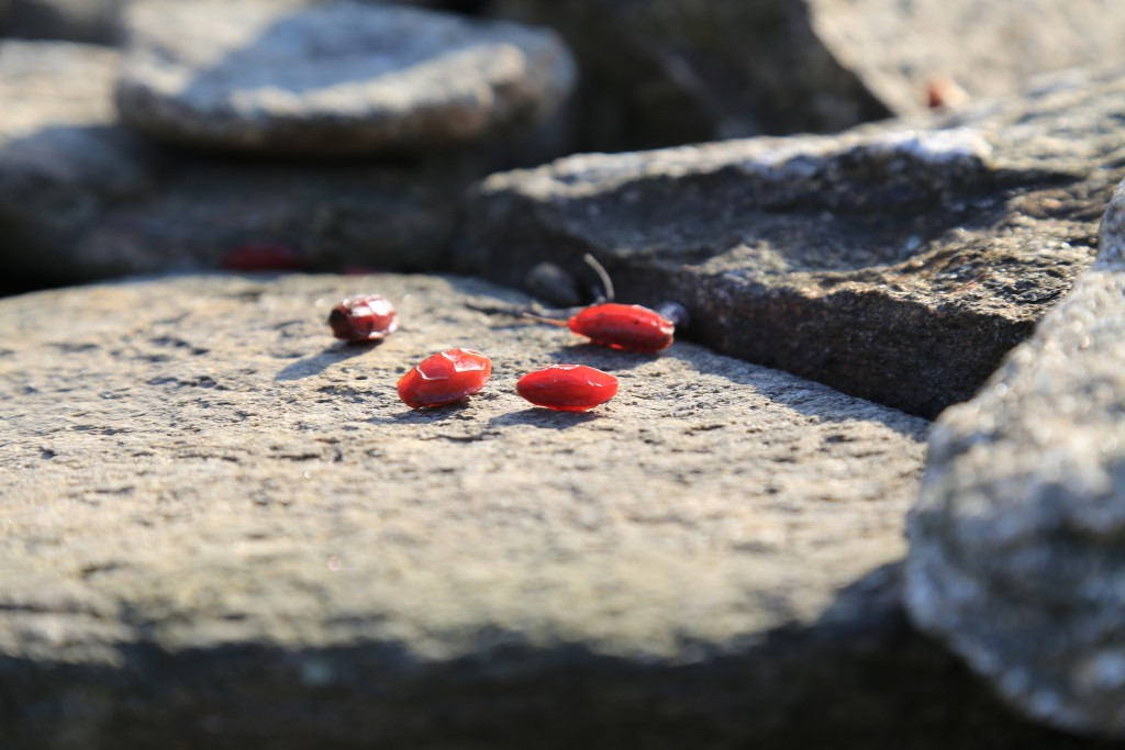 산수유꽃 (1)