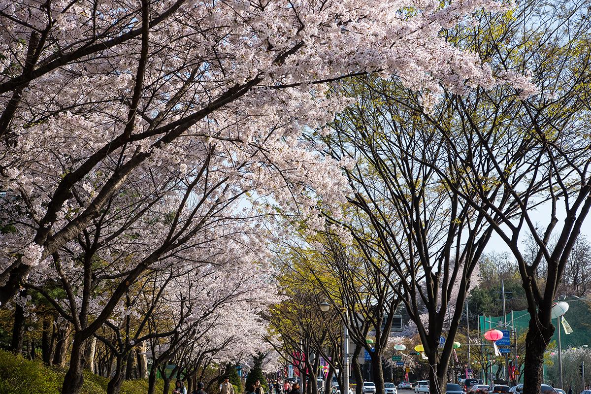 03 원미산진달래공원