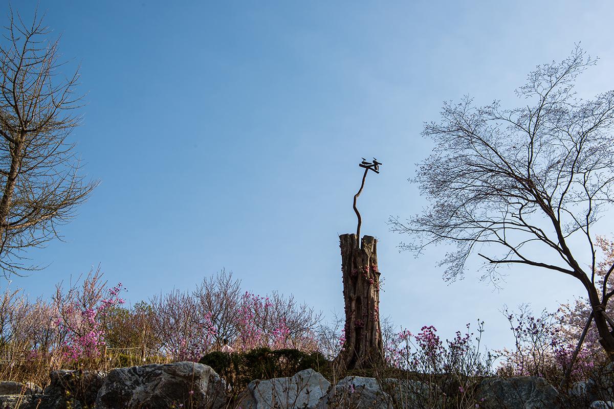 05 원미산진달래공원