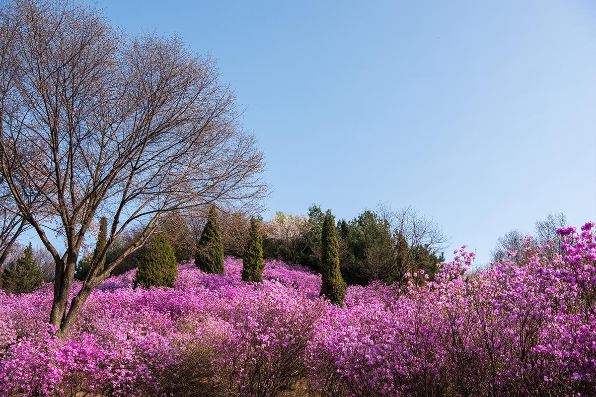 08 원미산진달래공원