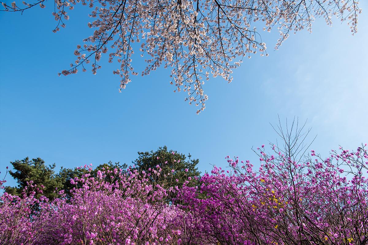 09 원미산진달래공원