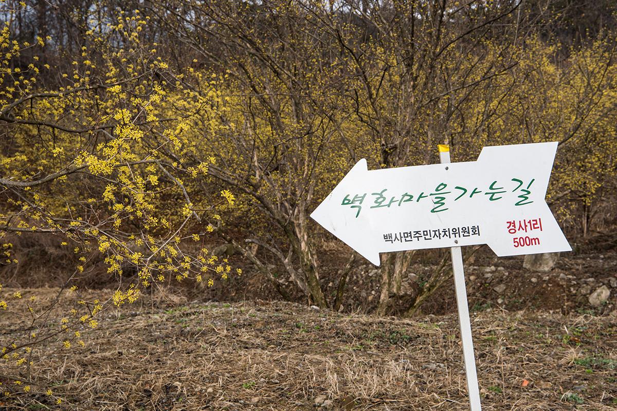 11 경사리마을