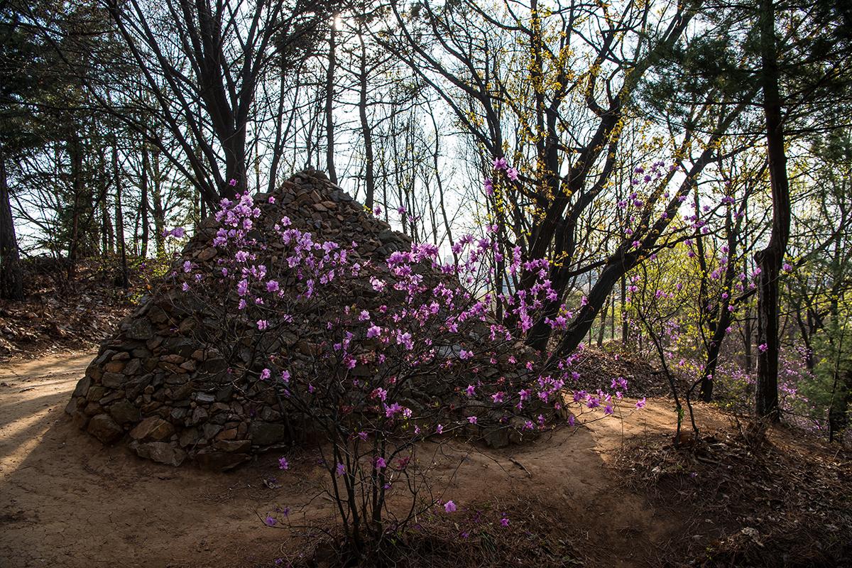 14 원미산진달래공원