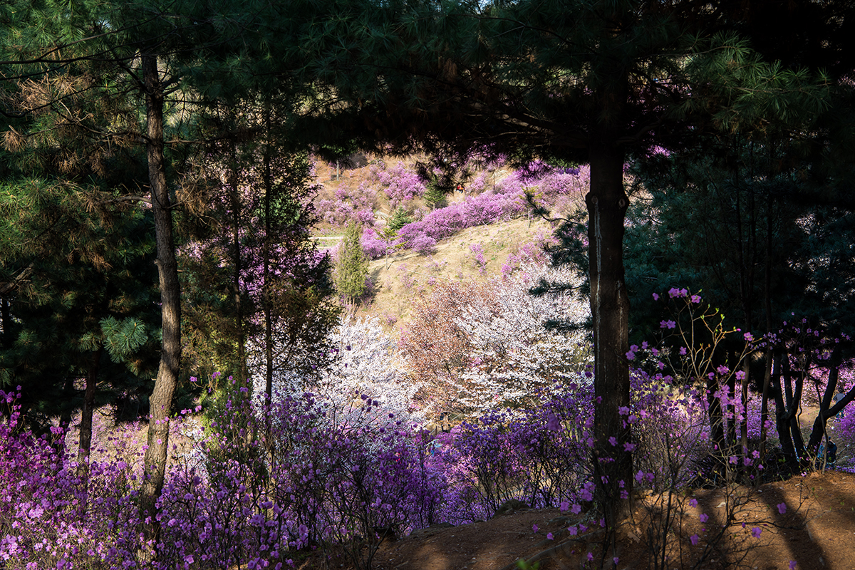 15 원미산진달래공원