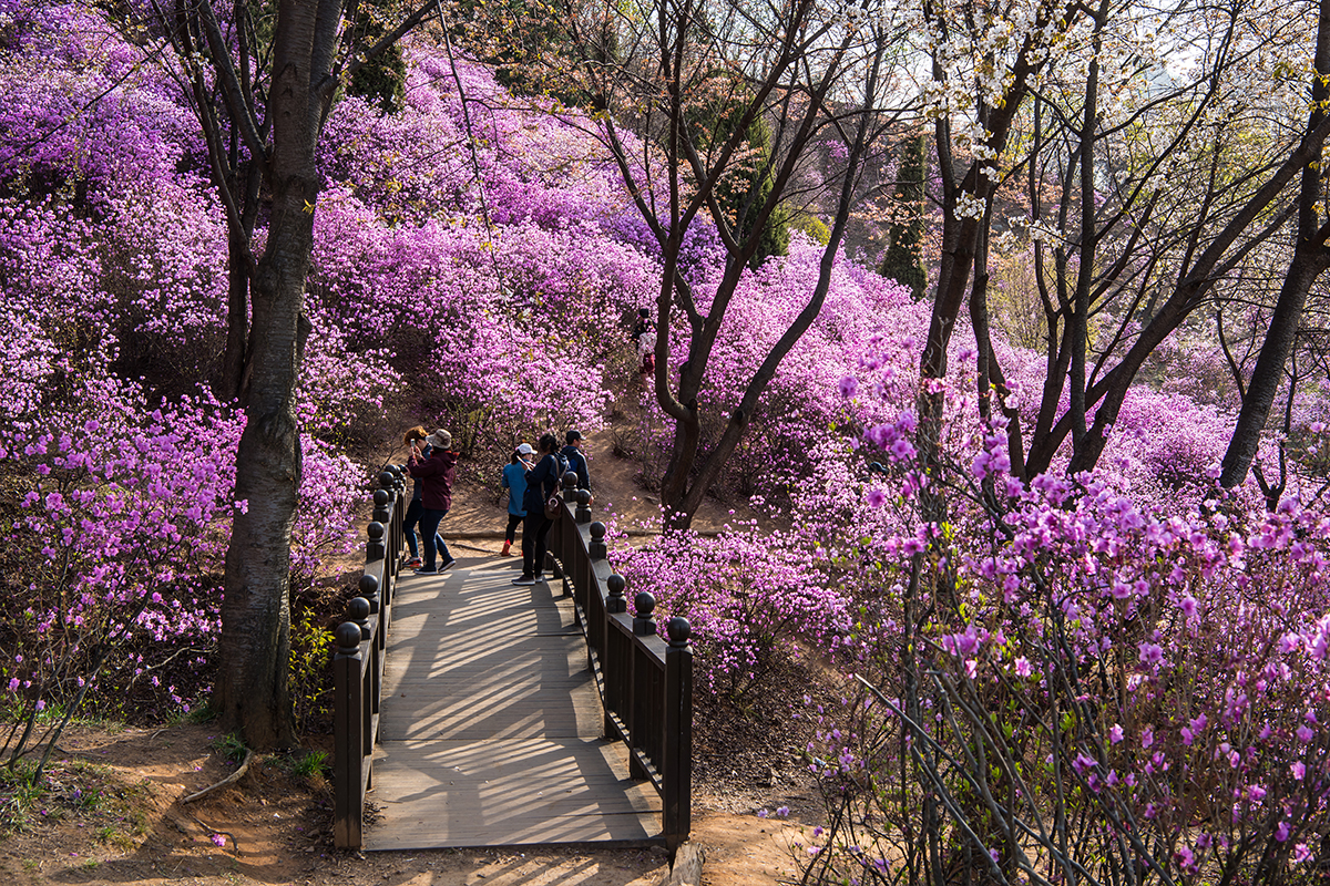 18 원미산진달래공원