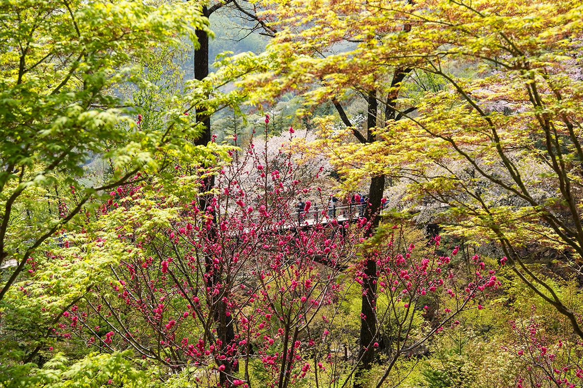 19 화담숲