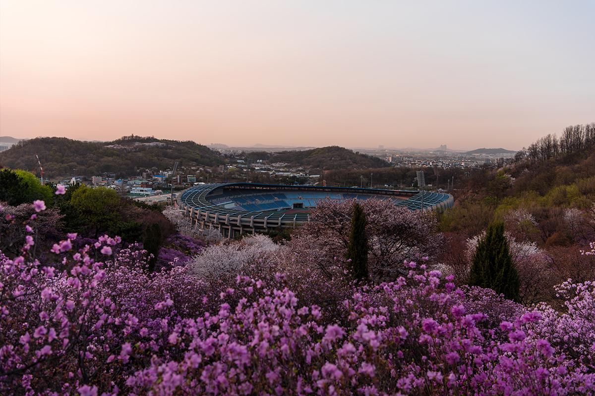 24 원미산진달래공원