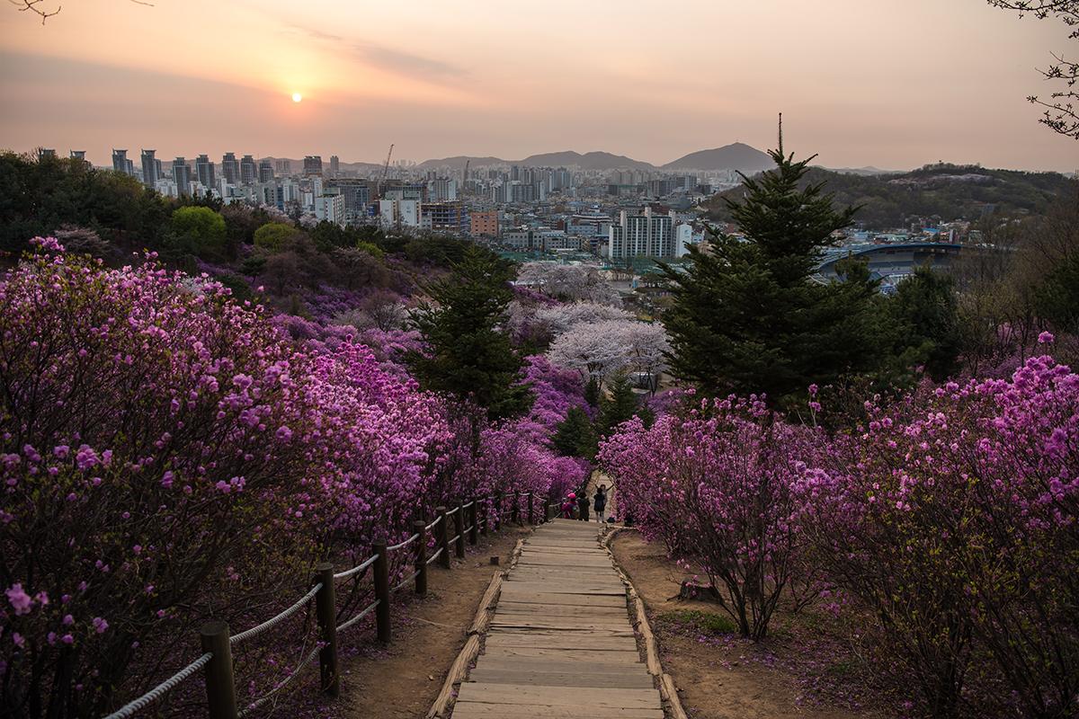 28 원미산진달래공원