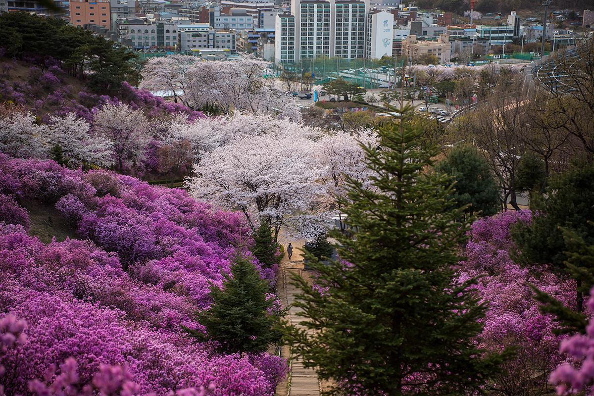 29 원미산진달래공원