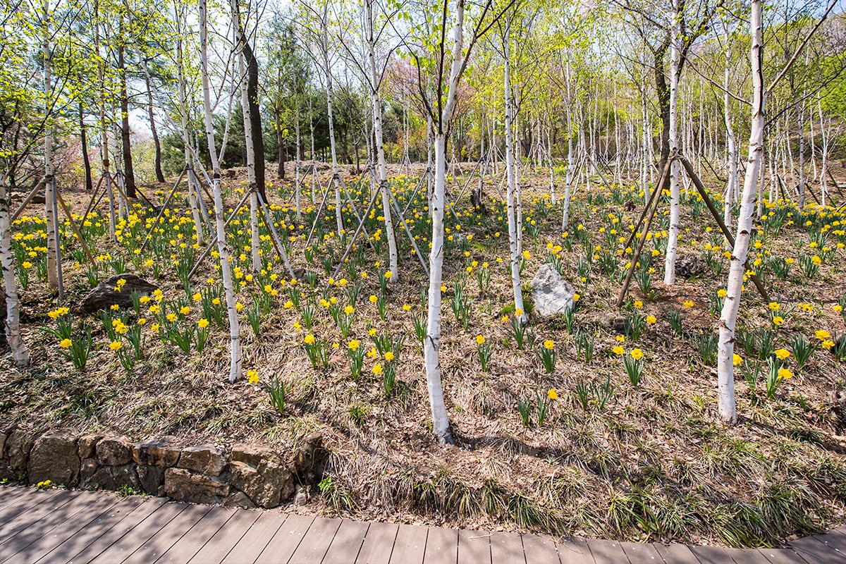 29 화담숲