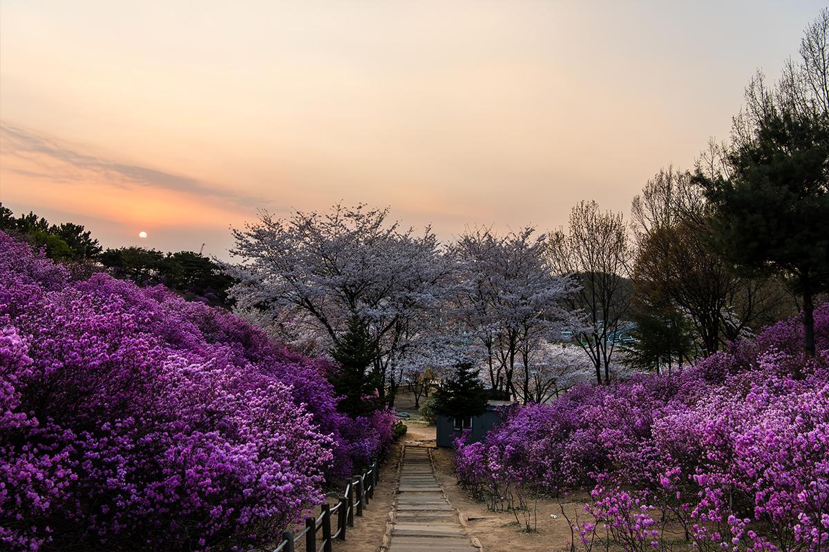 30 원미산진달래공원