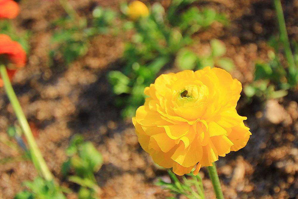 이천 가볼만한곳-봄나들이 하기 좋은 이천농업테마공원