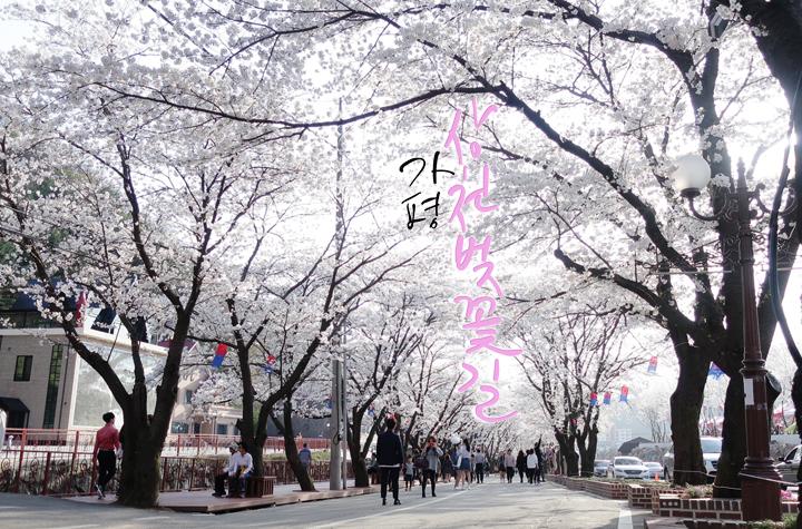 상천벚꽃길[도로명:에덴벚꽃길]
