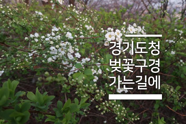 꽃피는 봄이오면