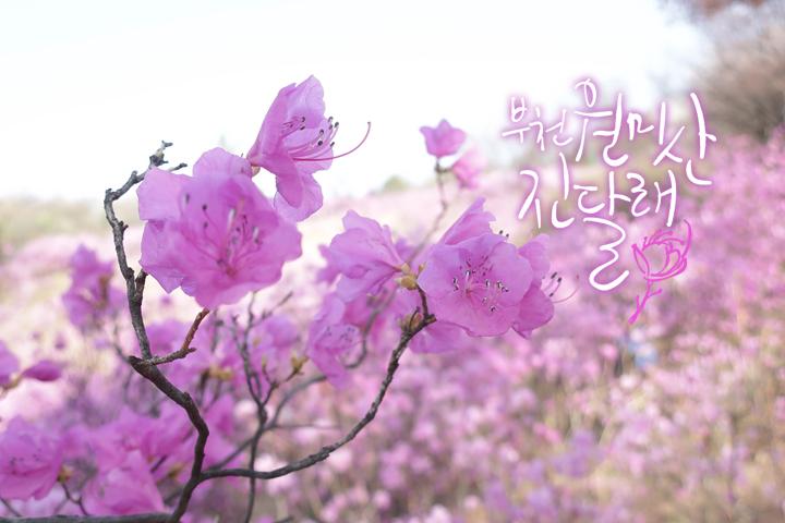 경기도 부천 추천여행 – 마음속의 경기도 163. 원미산 진달래동산