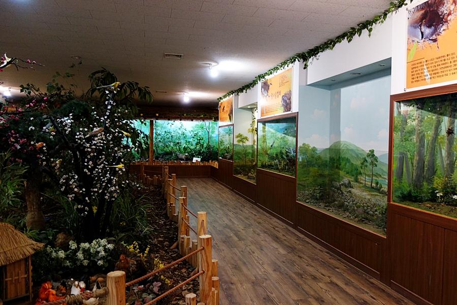 곤충박물관 (17)