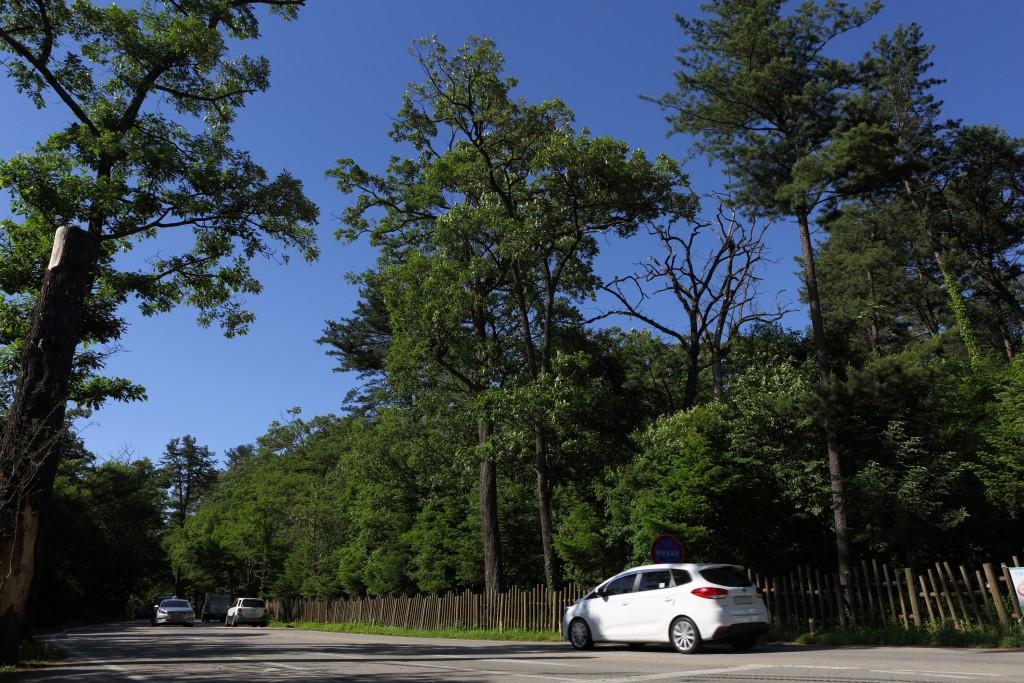 높은 거목들이 양 옆으로 늘어진 국립수목원길 드라이브 코스