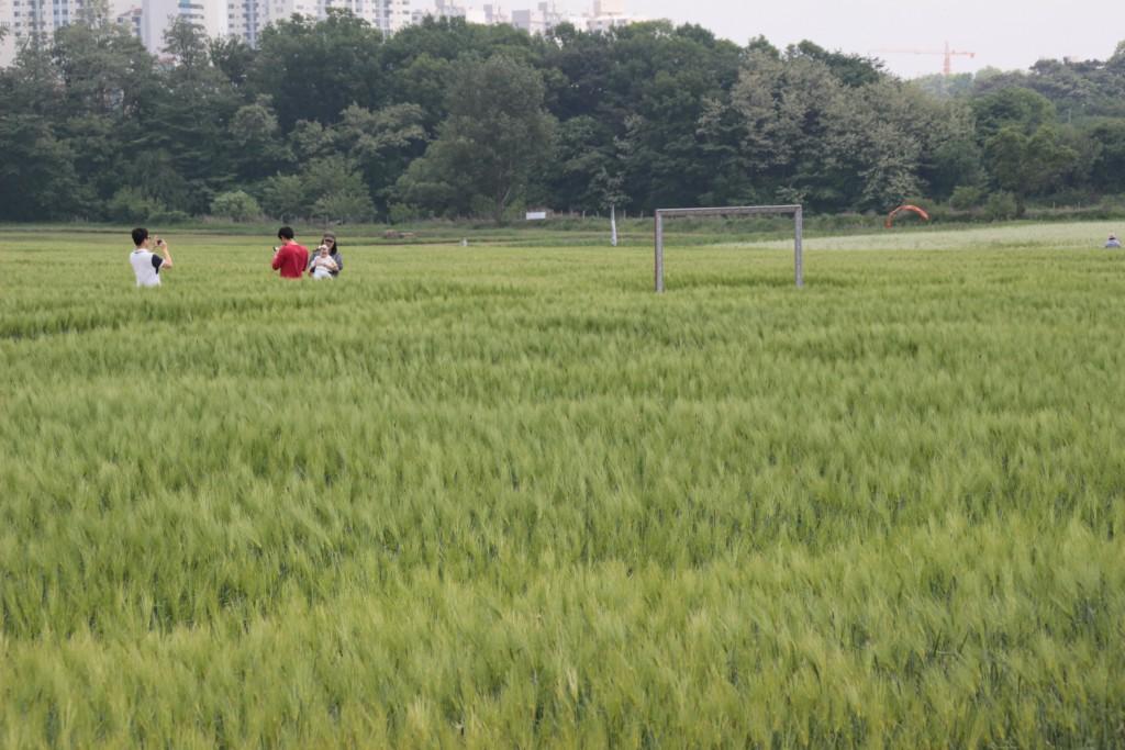당수동보리밭,원드컵경기 012