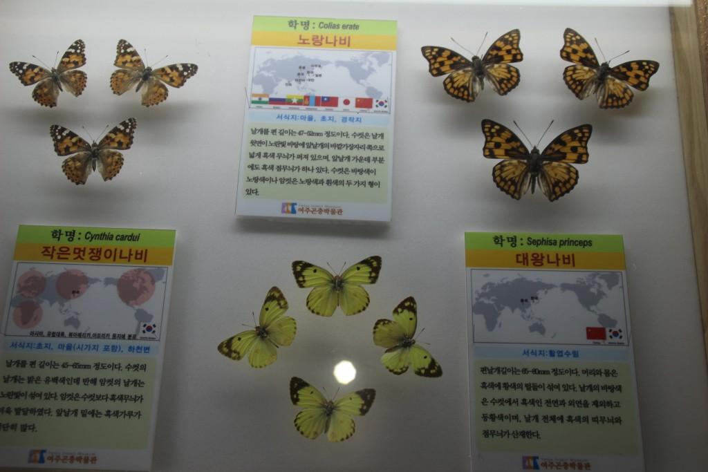 여주도자,신륵사 곤충박물관 361