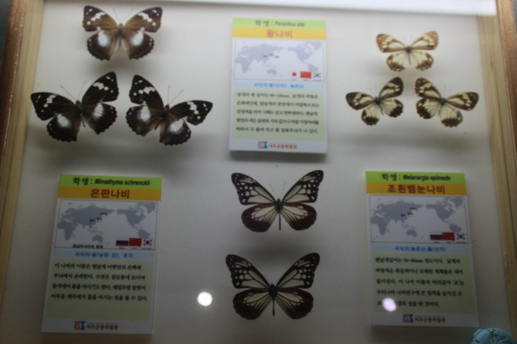 여주도자,신륵사 곤충박물관 364