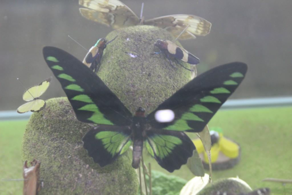 여주도자,신륵사 곤충박물관 376
