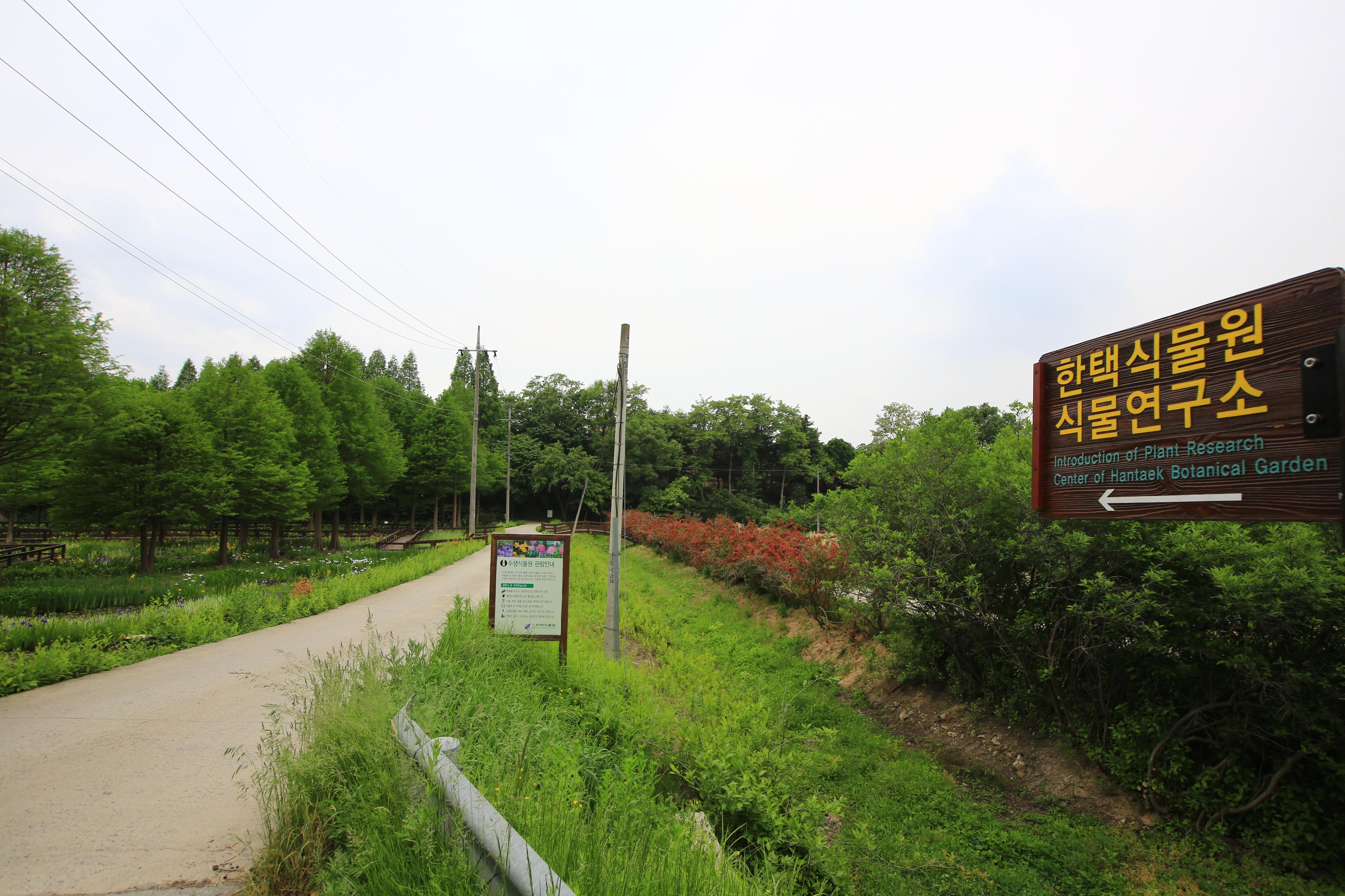 꼭꼭 숨어 있는 꽃밭 한택식물원 수생식물원
