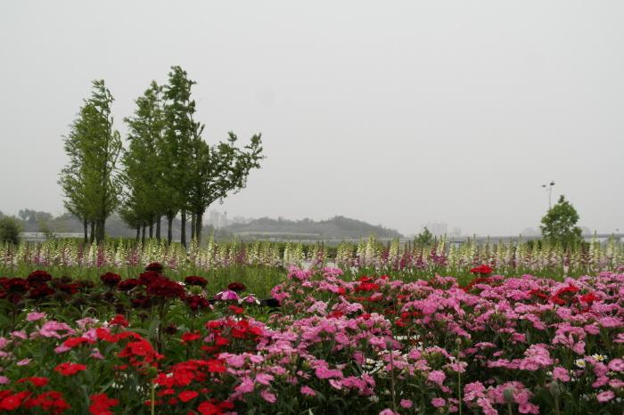 구리 유채꽃축제