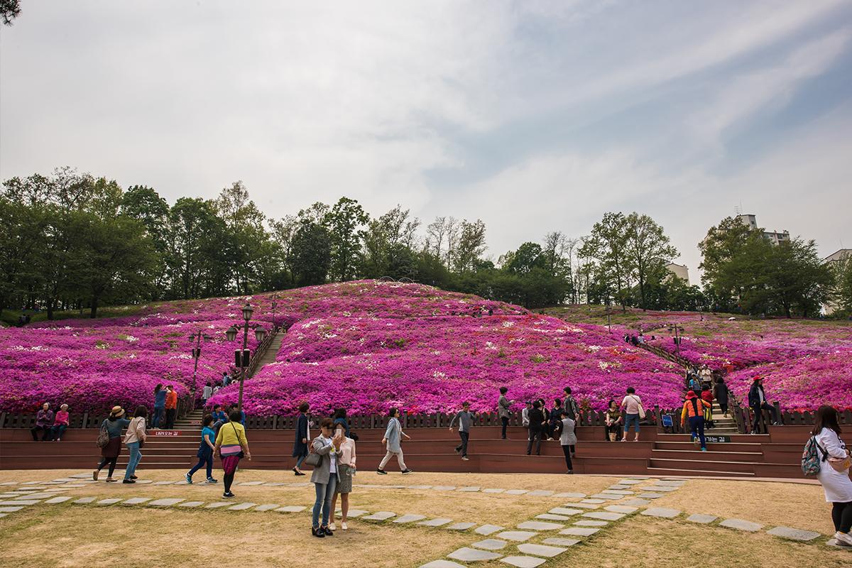 05 군포철쭉공원