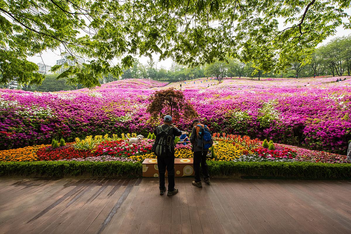 08 군포철쭉공원