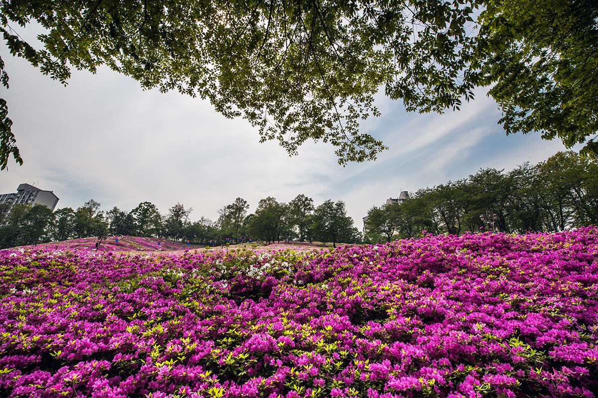 09 군포철쭉공원