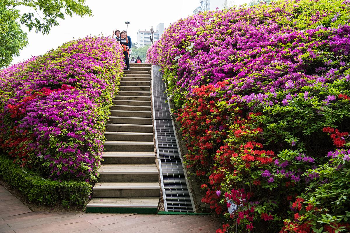 10 군포철쭉공원