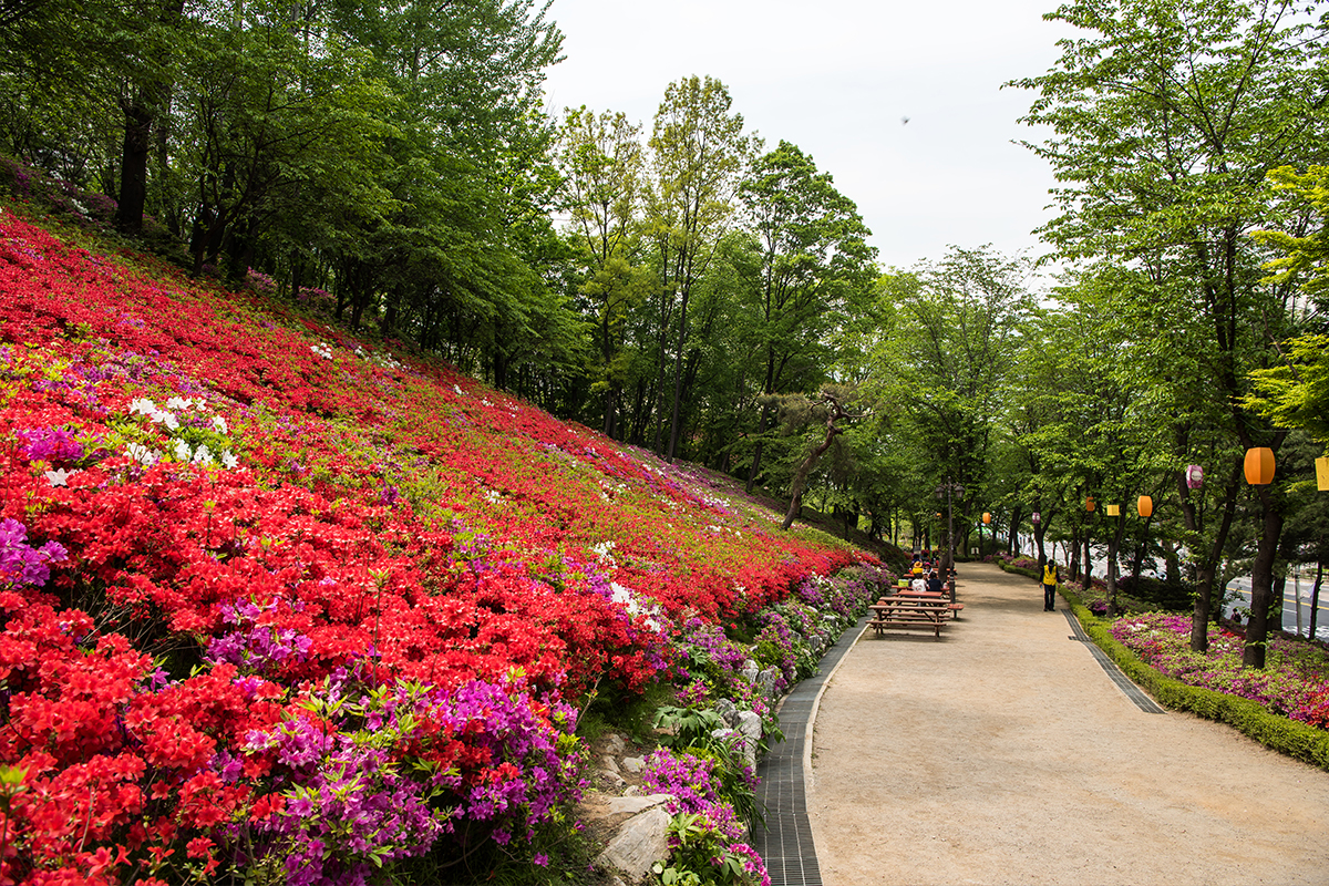 11 군포철쭉공원
