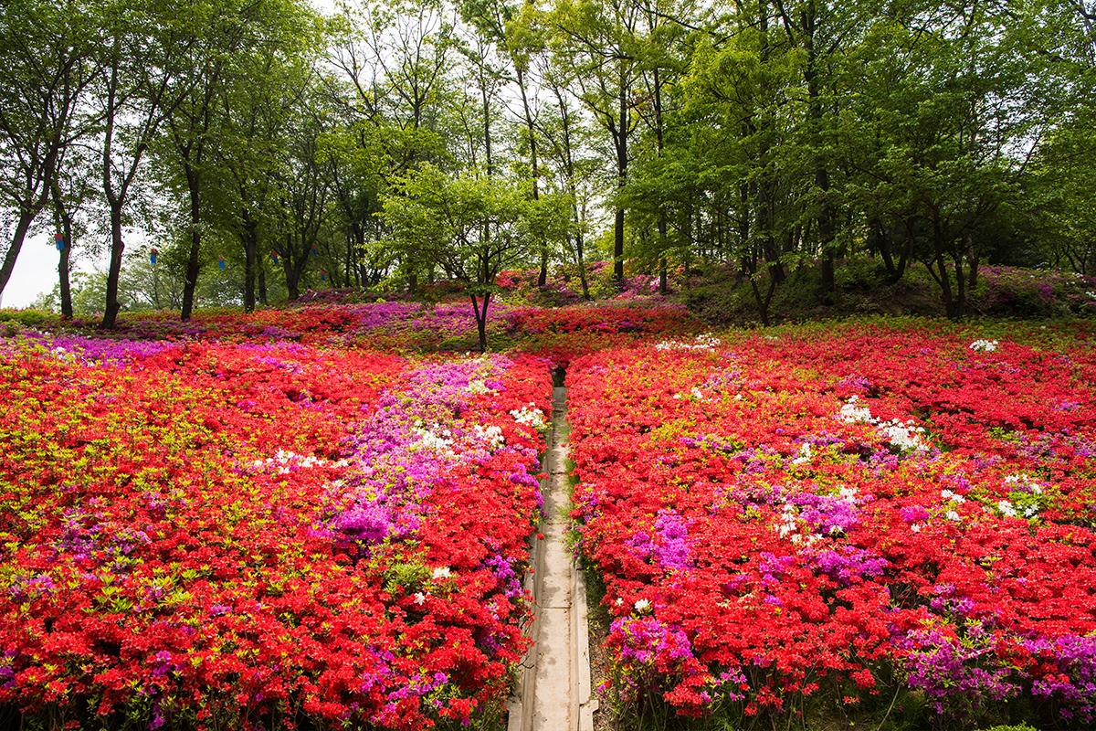 12 군포철쭉공원